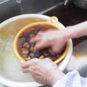 栃の実を水洗いします